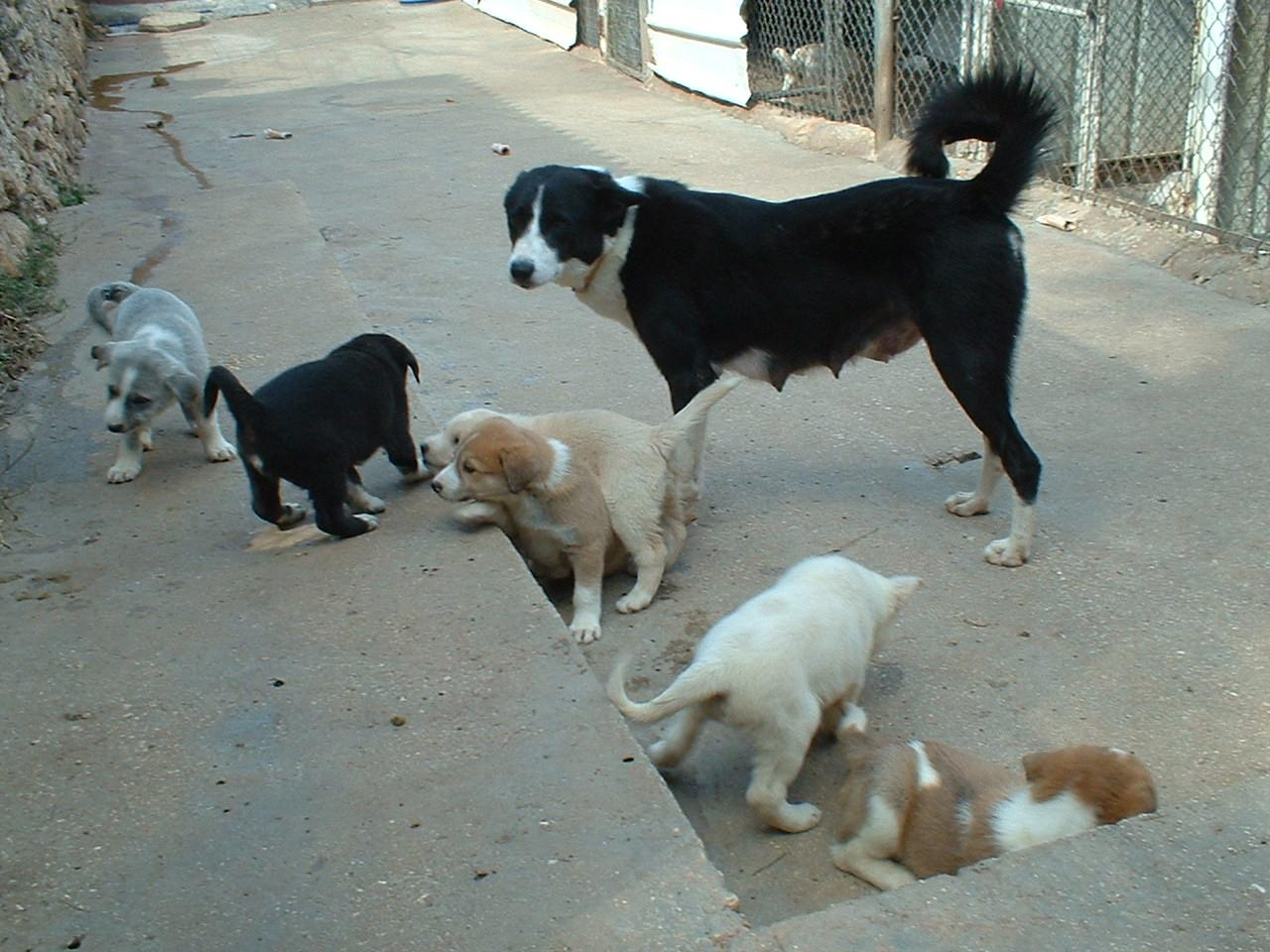 2010dominoandpups.jpg